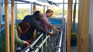 Daniel Piatek, Ph.D. candidate Sauvelson Auguste, and Professor Mary Berger working on their plants.